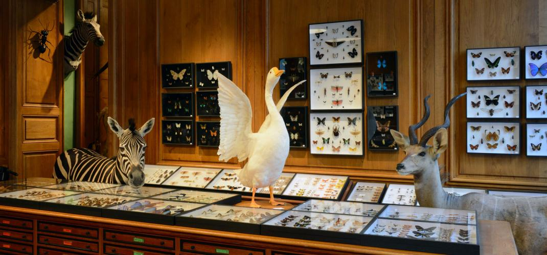 These small museums in Paris, sometimes secret, sometimes unexpected!
